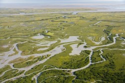 Copper River Delta Drainage