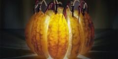 Grapefruit segments power a light