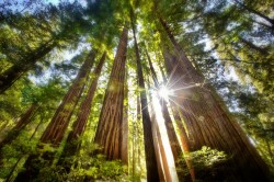 20120315092504_sequoia-coast-redwoods-muir-woods