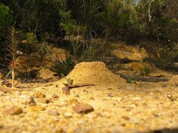 2313-ant-nest