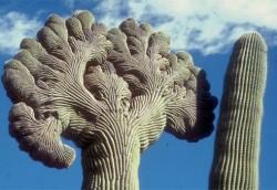 AZ-poi-saguaro-national-park-af