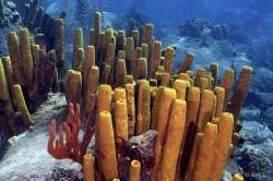 Dominica's corals