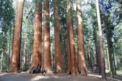 Sequoia-20110514_097