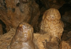 Stalagmites_-_Treak_Cliff_Cavern_2
