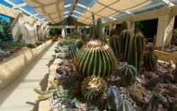 cactarium-villa-botanica
