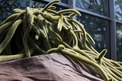 cactus-snakes-img_2400