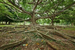 depositphotos_4517116-Tree-roots
