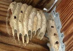 wasp.nest.2.5112