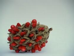 Magnolia_Seed_Pod_by_mattfl2