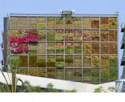 Vertical-Garden-in-San-Vicente-1