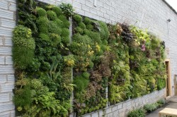 asthetic-urban-vertical-garden