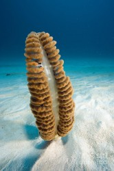 sea-pen-franco-banfi-and-photo-researchers