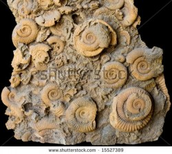 stock-photo-geology-paleontology-fold-of-fossil-shells-15527389